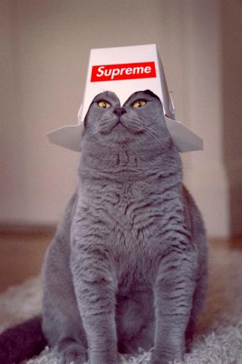cat-in-hat-5